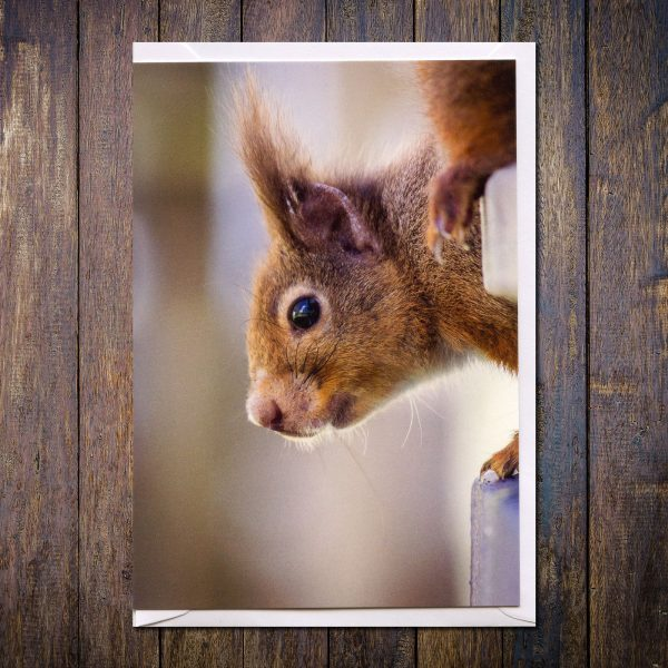 Red squirrel photo card