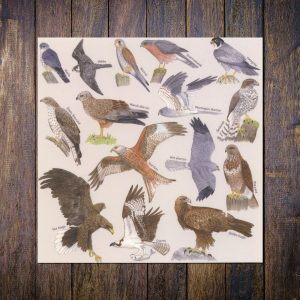 Bird-of-prey-card