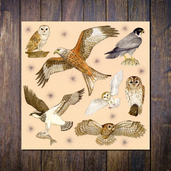 bird of prey greetings card