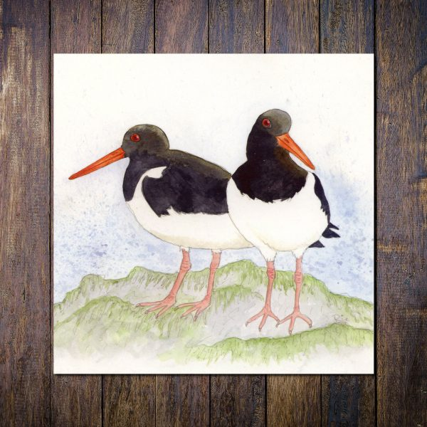 oystercatcher greetings card