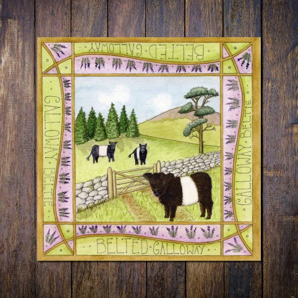 beltie dumfries galloway greetings card