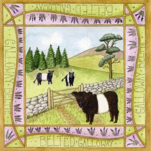beltie dumfries galloway greetings card