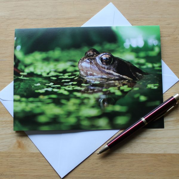 common frog photo card