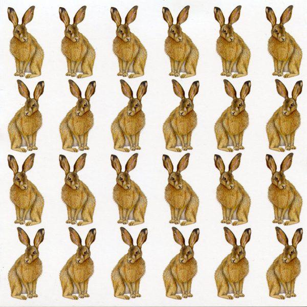 hare notecard