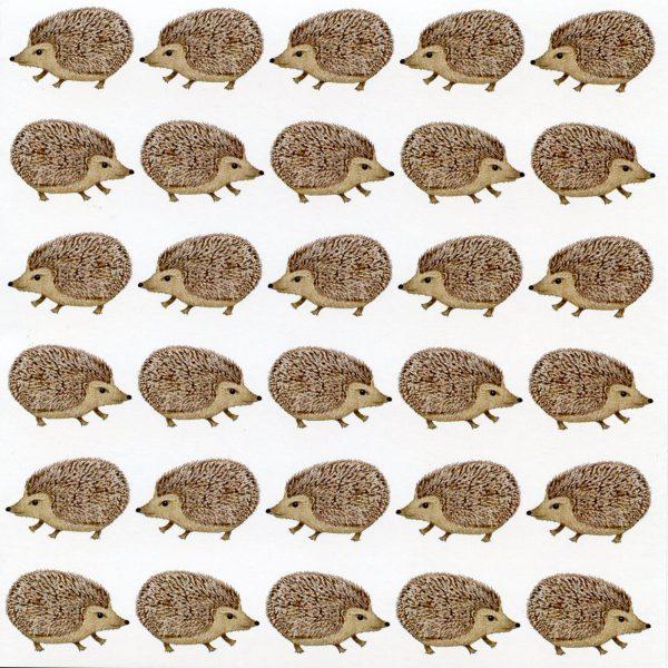 hedgehog notecard
