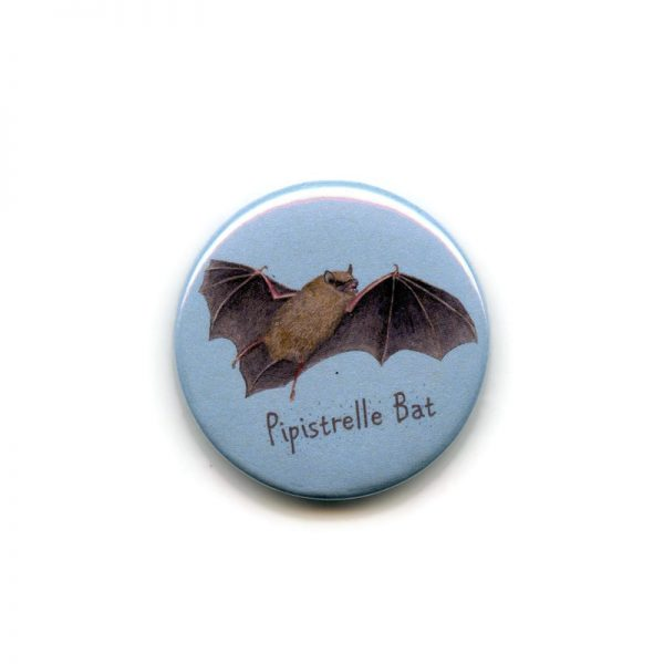 Pipistrelle bat magnet