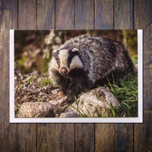 badger photo greetings card