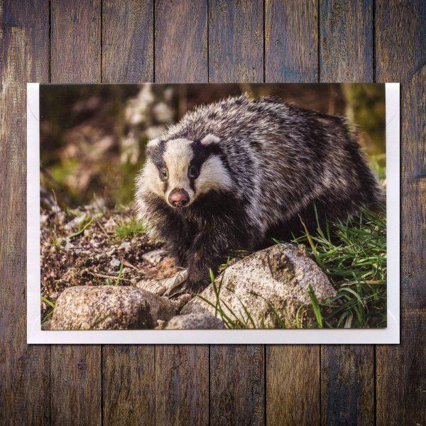badger photo greetings card