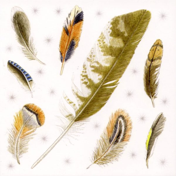 bird feathers greetings card
