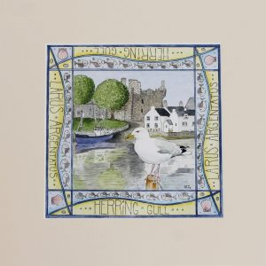 Herring Gull Kirkcudbright mounted print