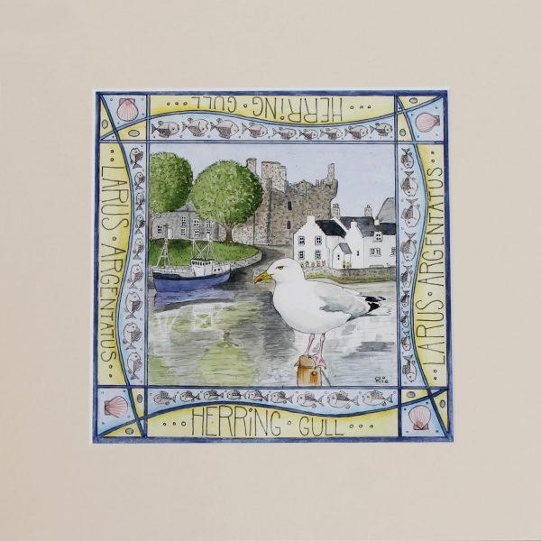 Herring Gull Kirkcudbright mounted print