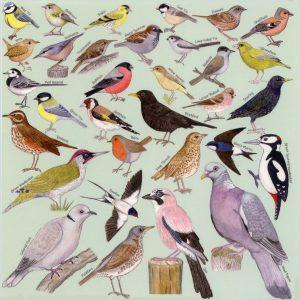 Garden-Birds-Card