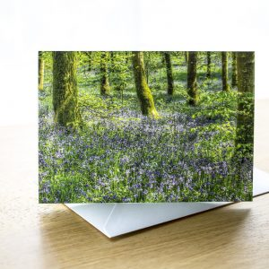 bluebell woods photo greetings card
