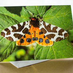 garden tiger moth photo card