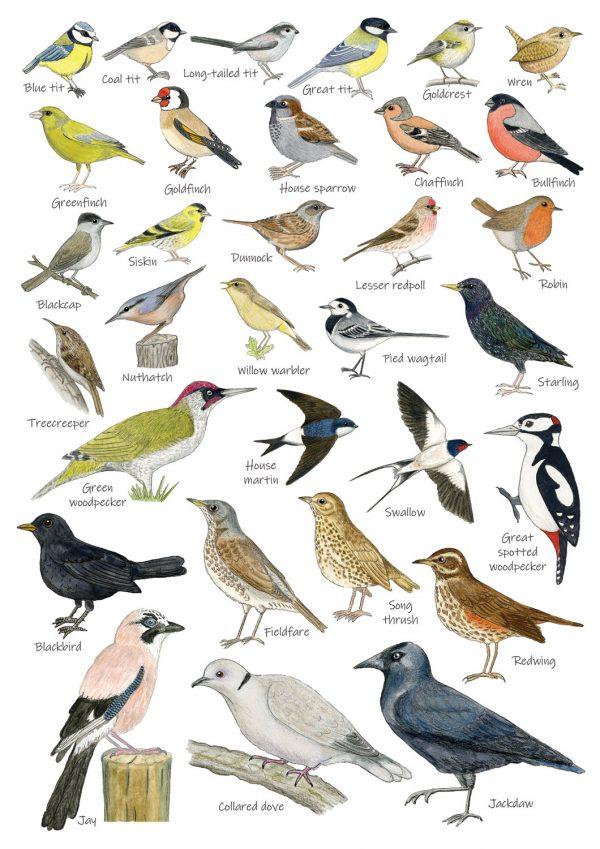 A4 bird poster