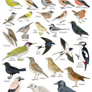 A3 Garden Birds Poster