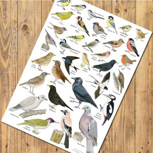 A3-poster-garden-birds