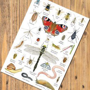 A5-Garden-Minibeasts-postcard-chart