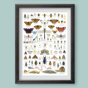 British Invertebrates Identification A3 Poster