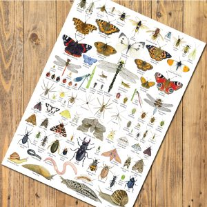 A3 Nature Identification Posters