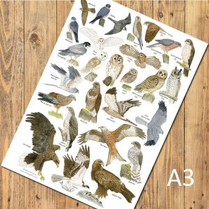 A3-poster-birds-of-prey-6