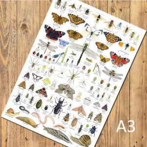A3-poster-insects-invertebrates-bugs