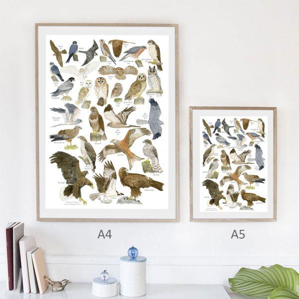 A4 A5-poster-birds-of-prey