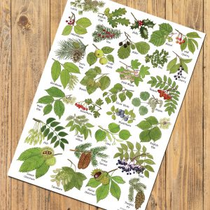 A4-Tree-Leaves-Poster