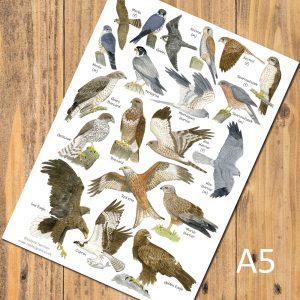 A5-Birds-of-Prey