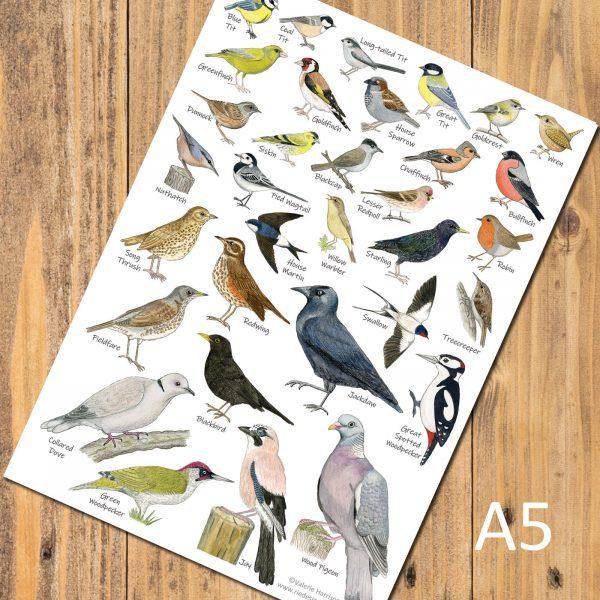 A5-Garden-Birds-postcard