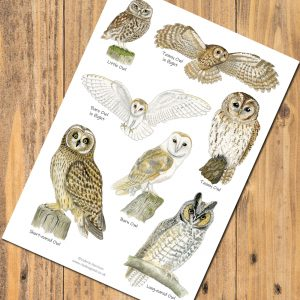 A5-owls-poster