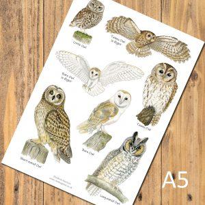 A5 british owls postcard chart