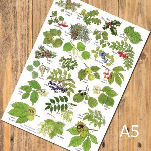 A5-Tree-Leaves-postcard