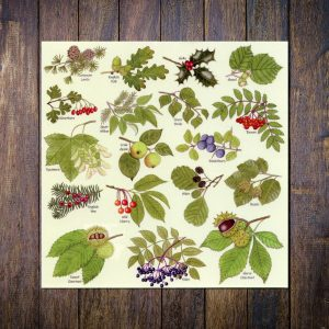 Tree-Leaves-Greetings-Card