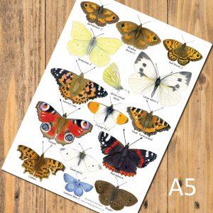A5-Garden-Butterflies-postcard