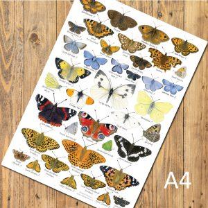 A4-Butterflies-Poster