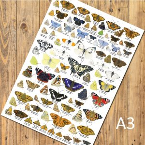 A3 Butterfly Poster