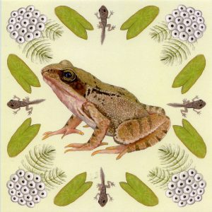 Frog lifecycle greetings card