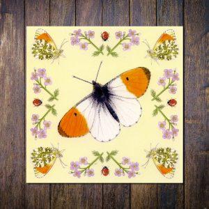 orange tip butterfly greetings card