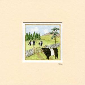 Galloway-Beltie-Mounted-Mini-print