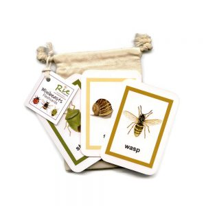 Minibeast-Insect Flashcards