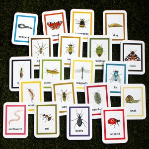 Minibeast insect flash cards