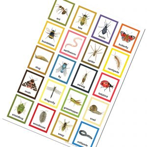 Minibeast childrens insect poster