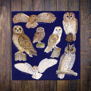 British owls greetings card