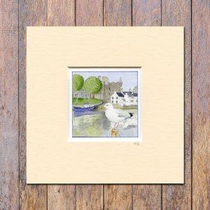 herring-gull-kirkcudbright-miniprint