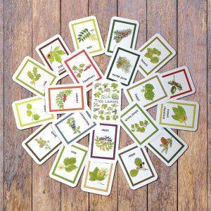 British Tree Leaves Flash Identification cards