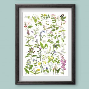 A4-woodland and hedgerow wild flowers
