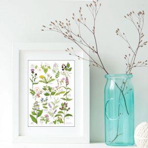 A5-hedgerow wild flowers