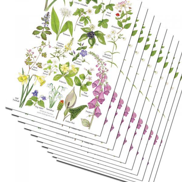 A5-Woodland-Flowers Chart