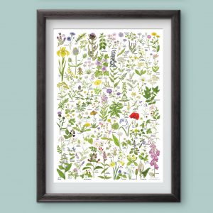 A3-poster-wild-flowers